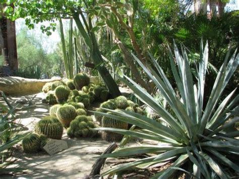 Palm Springs Botanical Garden by Moorten Botanical Garden Picture Of Palm Springs