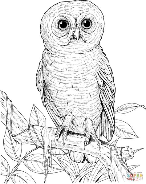 coloring pages of big owl big eyed owl coloring page free printable coloring pages