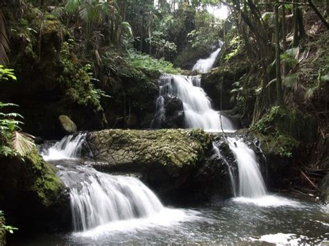 onomea tropical waterfall hawaii pictures of the day on