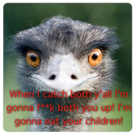 Ostrich Meme - kevin hart the ostrich oh my god to funny why would