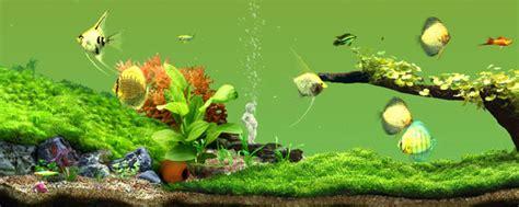 Aqua Garden by Aqua Garden 3d Freshwater Aquarium Adapts 3dvr