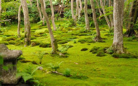 Moss Garden Kyoto by Image Gallery Moss Garden Kyoto