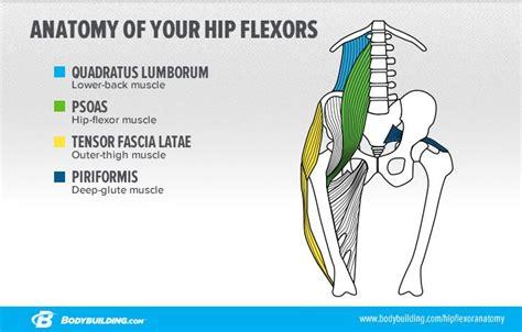 hip flexor diagram hip flexor diagram hip flexion elsavadorla
