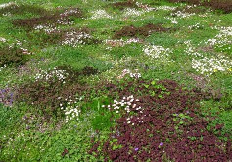 information grass free lawns