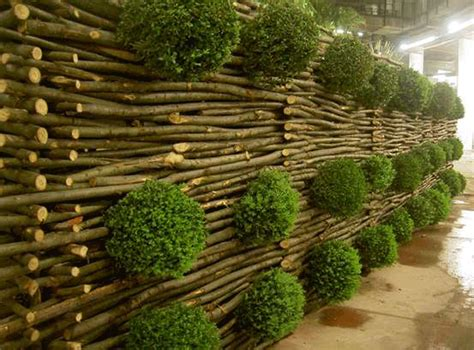Barriera Fonoassorbente Vegetale by Barriere Antirumore Giardino Idee Per La Casa Syafir