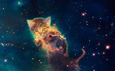 universe wallpapers for windows 8 galaxy cat wallpaper windows 8 wallpapersafari