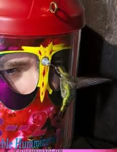 hummingbird feeder hat so random pinterest