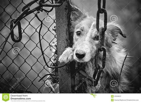 imagenes a blanco y negro tristes sad dog black and white stock image image of cage fear