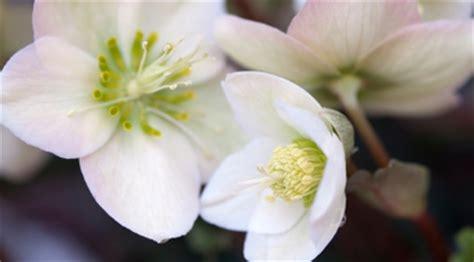 fiori da giardino invernali homeimg it