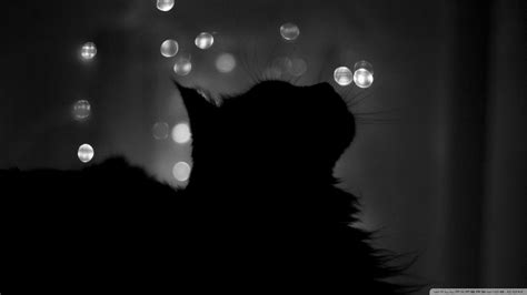 wallpaper cat night black cats hd wallpapers