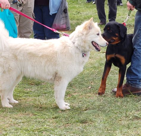 what is parvo in dogs what is parvo in dogs countryside network