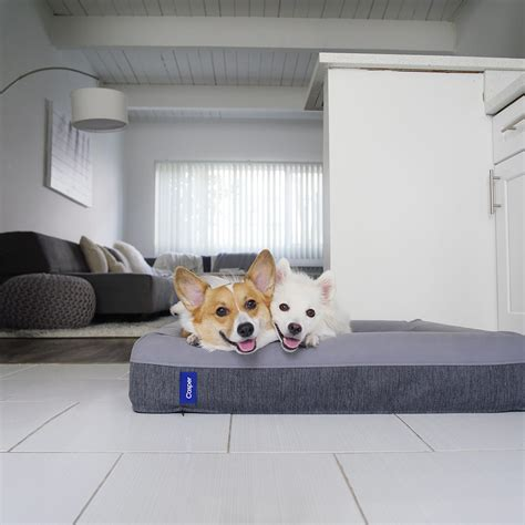 dog beds for people dog beds for people 0 replies 20 retweets 67 likes