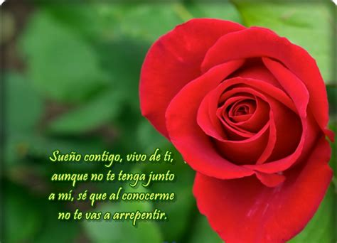 imagenes de rosas bellas con frases de amor imagenes de flores hermosas con frases de amor para face