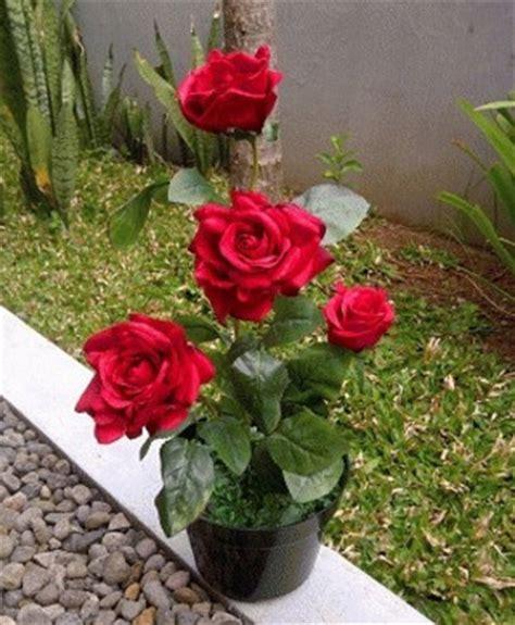 menanam bunga mawar  pot tanaman hias