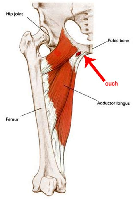 pulled groin diagram stretches to overcome groin runner s world community