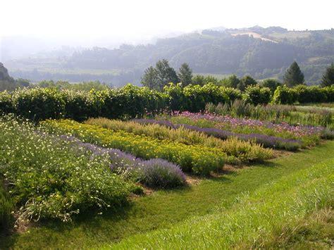 giardino delle erbe casola valsenio giardino delle erbe herb garden in casola valsenio