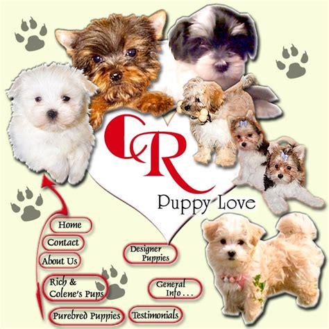 when can you sell puppies 51 best sell puppies images on puppies pet store and puppy mills
