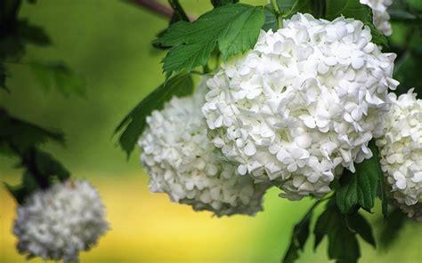 smart phones ios floral blossomshydrangea amazing