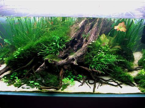 aquascape tree pin by carlos fern 225 ndez on aquascapes fish pinterest