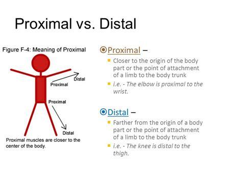 Proximal Vs Distal Anatomy Images - human anatomy diagram organs