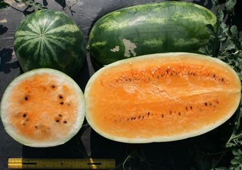 6 vegetables that come in 3 colors what are some fruits and vegetables that naturally come in