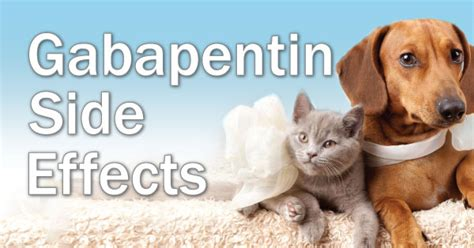 gabapentin for dogs does gabapentin cause weight gain in dogs