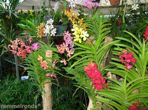 Pot Anggrek Vanda orchid vanda photobento