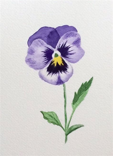 25 best ideas about pansy on violet