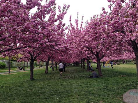 Um Botanical Gardens Ent 227 O Resolvi Fazer Um Cerejeiras Botanical Garden