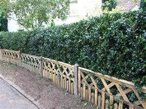Formal Gardens Pictures - green holly hedging instant hedging amp hedges green holly holly hedging