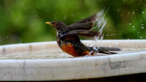 Birds In Your Backyard by Bird Bath All You Need To In Keeping Your Backyard