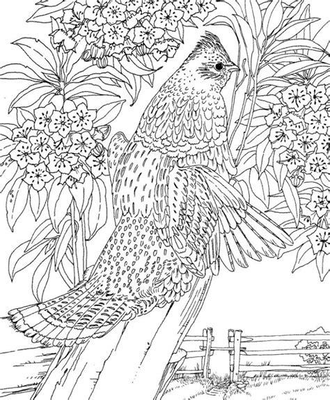 coloring pages for adults difficult animals get this printable difficult animals coloring pages for