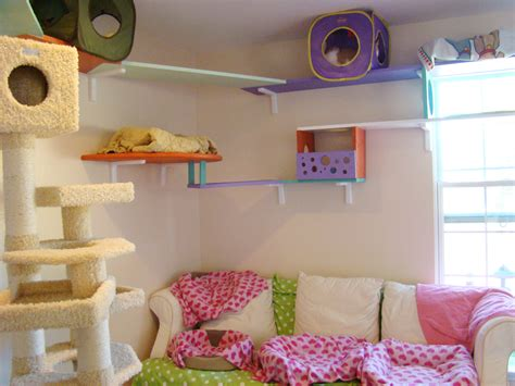 cat room a look inside an exceptional foster home
