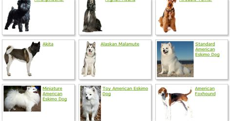 Dogs Breeds Land: Dog Breeds List With Picture