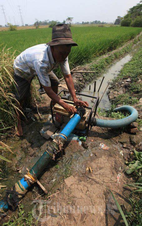 Mesin Laminasi Untuk Foto petani menyedot air dengan mesin untuk mengairi sawah