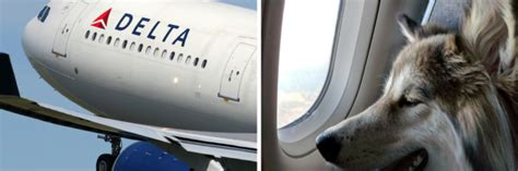 Delta Airlines Emotional Support Animal Letter delta air lines tightens documentation for service and support animals the mighty