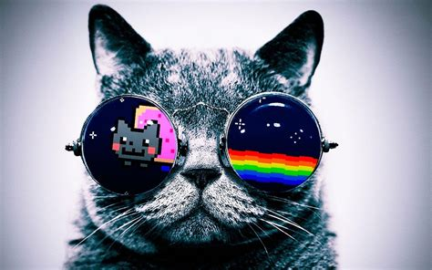 cool cat backgrounds cool cat wallpapers 71 images
