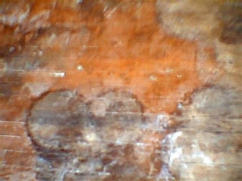 Removing Stains From Hardwood Floors by You Can Even Go For Hardwood Flooring Plano Tx Who Can