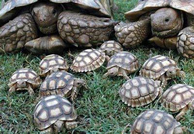 imagenes de libres y tortugas informacion sobre la tortuga terrestre informacion sobre