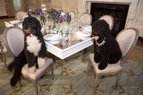 obama dogs obama s dogs are more special than you noisyroom net