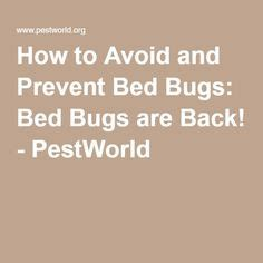 how to fight bed bugs bed bugs bug bite and beds on pinterest
