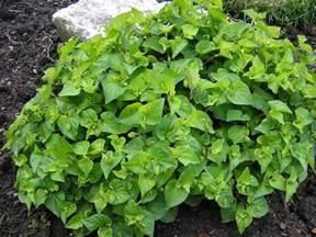 Garden Flower Identification Plant Identification Gardenbanter Co Uk