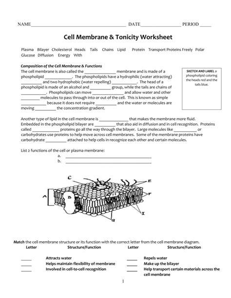 worksheet cell membrane  tonicity worksheet grass