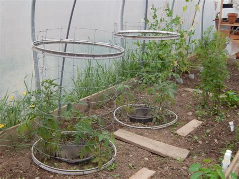 Tomato Planters On Wheels by How To Increase Your Tomato Harvest Sow And So