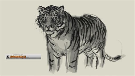 G Drawing Images by How To Draw Tiger