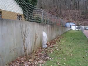 betonmauer garten mauer versch 246 nern seite 1 gartenfreunde mein sch 246 ner