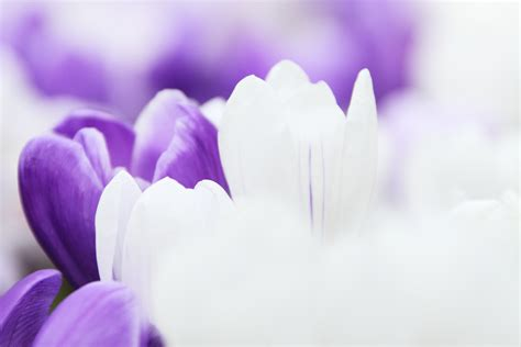 gambar alam mekar menanam putih ungu daun bunga