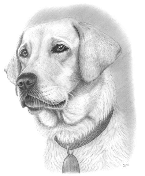Drawing Dogs by Pencil Drawings Drawing Pencil