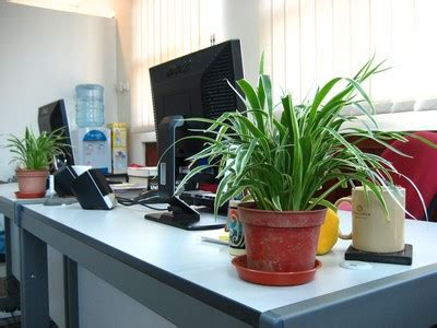 good plants for office office plants boost well being at work the exeter daily