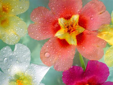 Fresh Flowers by Fresh Flowers